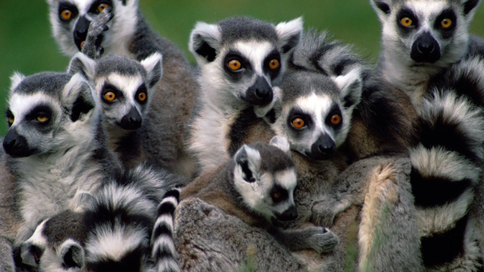 volunteer lemurs madagascar